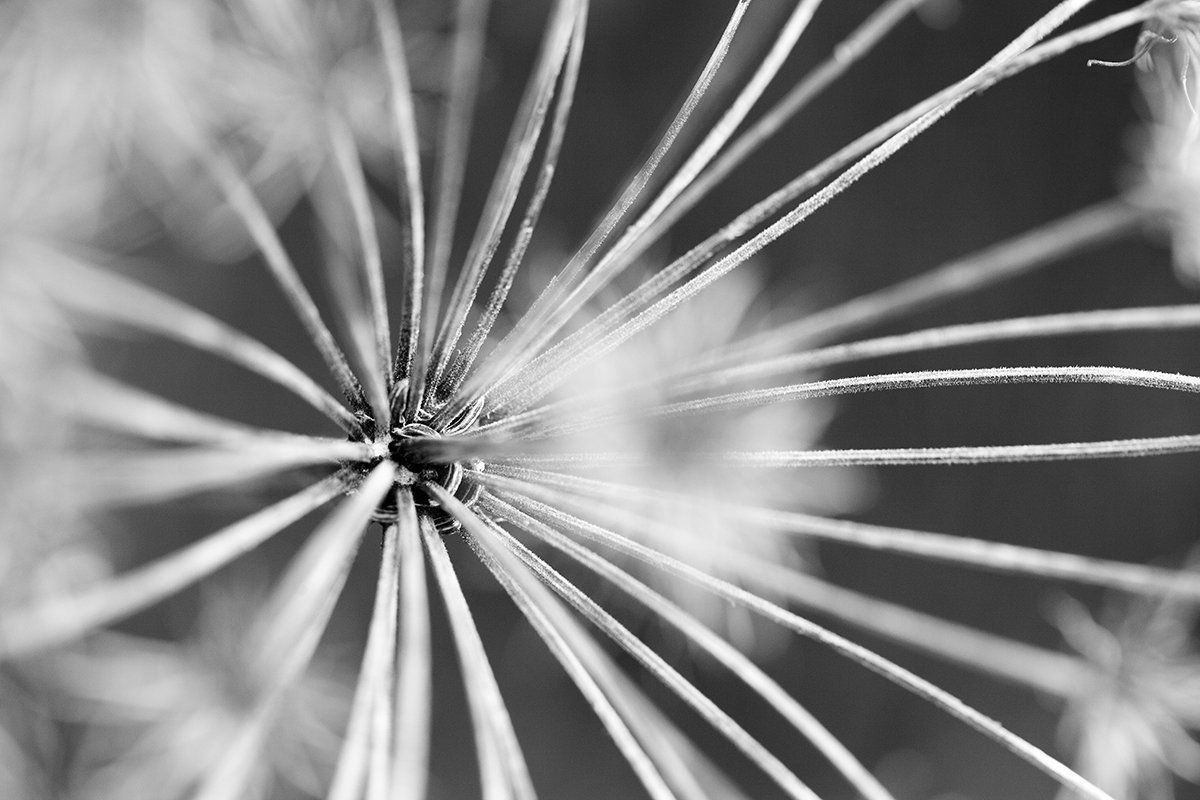 Fotografía Blanco y Negro - Rosa Collado